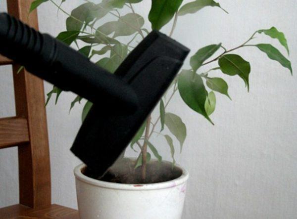 Уход за комнатным растением при помощи пароочистителя