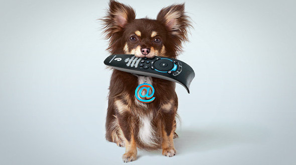 Собака с пультом