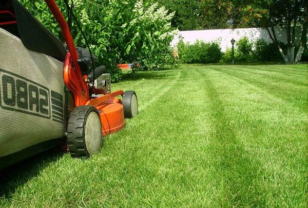 Идеальный газон с газонокосилкой