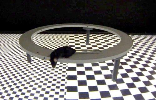 Мышь в виртуальной реальности