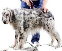Рейтинг машинок для стрижки собак