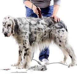 Топ-5 лучших машинок для стрижки собак