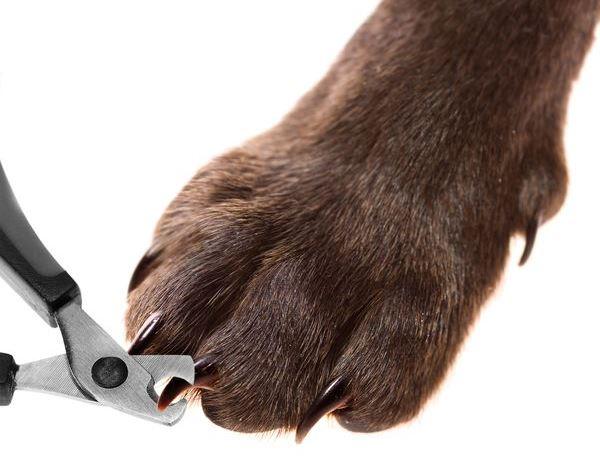 Гильотина для собак
