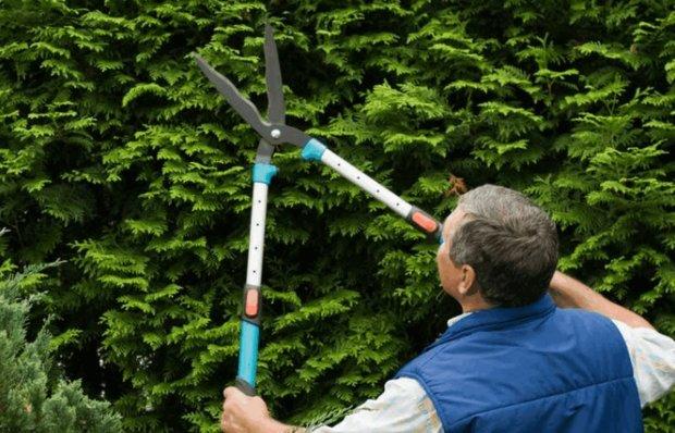 Работа садовыми ножницами
