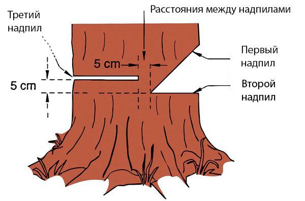 Правила валки дерева