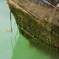 Создан безопасный способ защиты кораблей от микроорганизмов