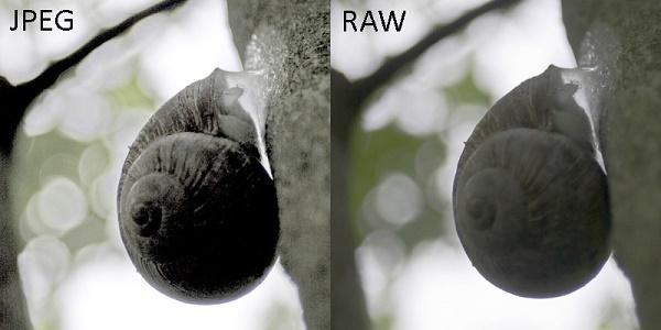 Отличия raw от jpeg