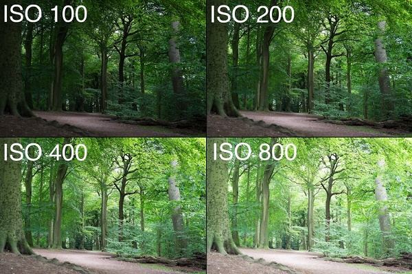 iso 100-800
