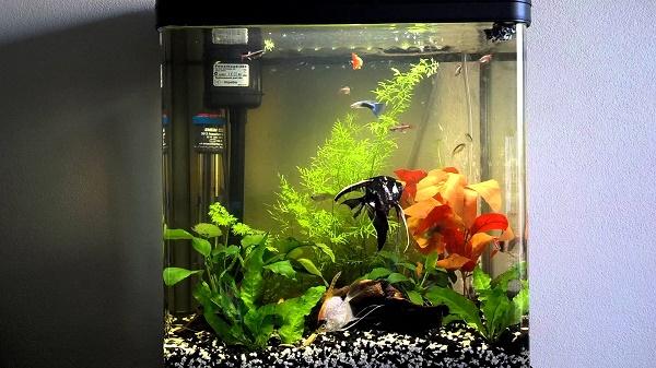 Помпа в аквариуме