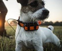 Навигатор для собак