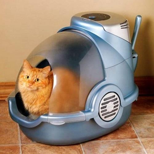 Кот в биотуалете