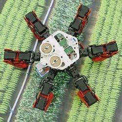 Новый робот-муравей может ориентироваться в пространстве по компасу