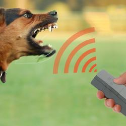 Как выбрать эффективный отпугиватель собак