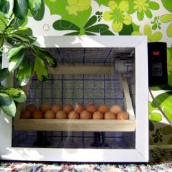 Как сделать инкубатор для яиц в домашних условиях
