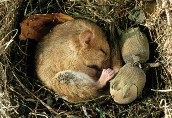 Животные в спячке